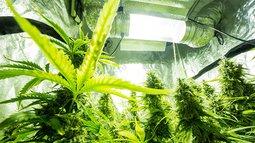 ROO medicinal cannabis market move.jpg