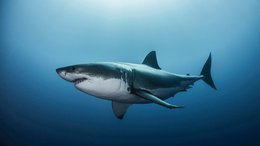 SM8 Continues US Roll Out of its Shark Mitigation Technology With $10M Proposal on the Table