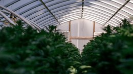 Ag-Tech Provider Roots Extends its US Footprint with Another Sale to a Cannabis Producer