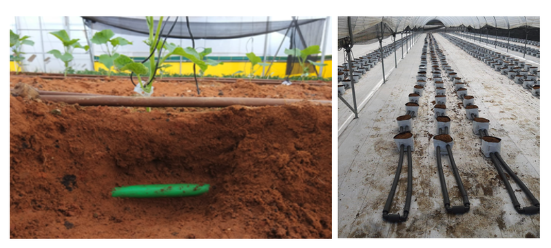 Roots' RTZO technology in field trials